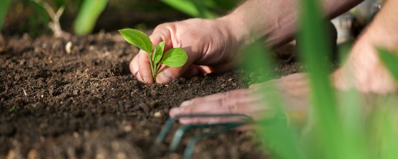 Gardening - Community Development - New and Emerging Communities - Denman Prospect